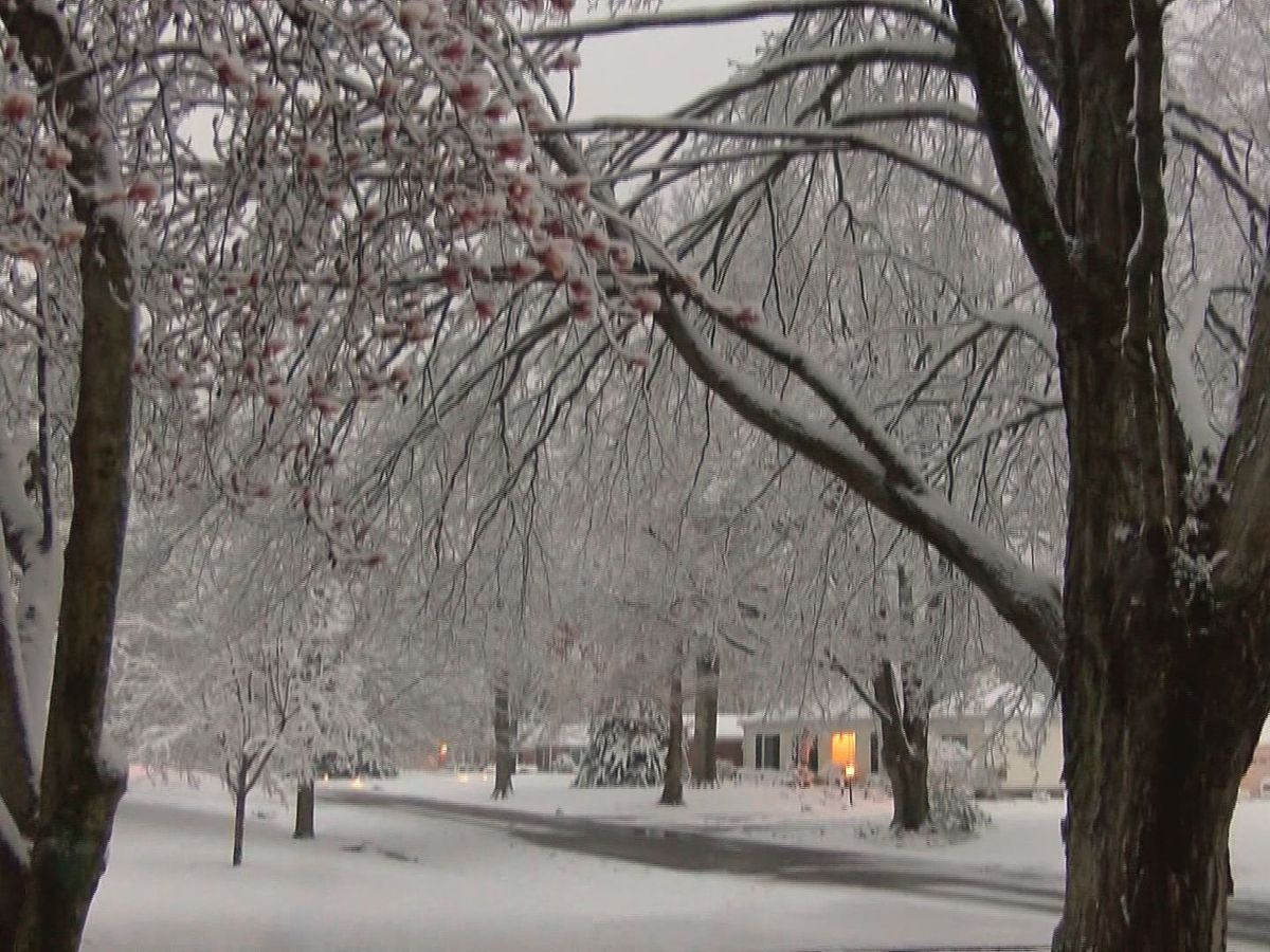 WAVE Country trees, cars, houses could be impacted by flash freeze