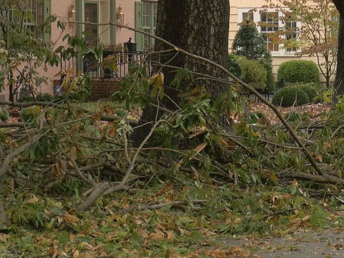 Louisville Metro, Hardin Co. accepting storm debris from residents