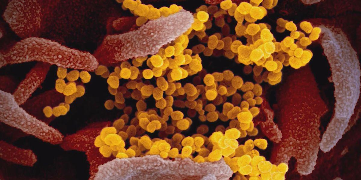Health experts clear up coronavirus myths