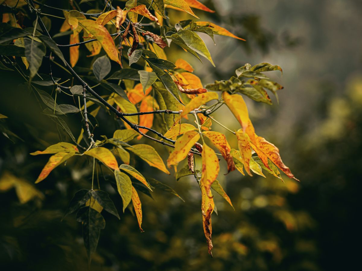 Behind the Forecast: How weather affects Fall colors