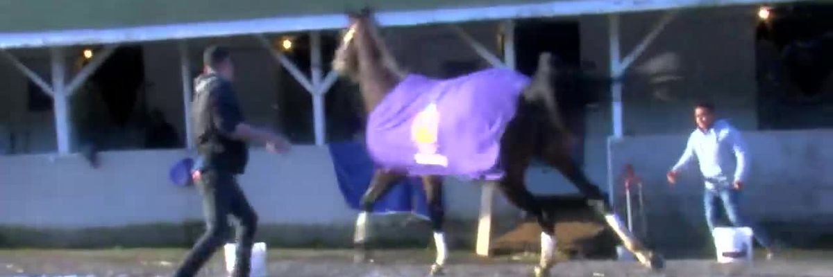 WATCH: Derby contender gets loose on Churchill Downs backside