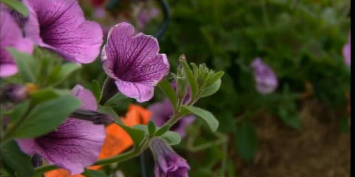 Behind the Forecast: Helping plants recover after a frost