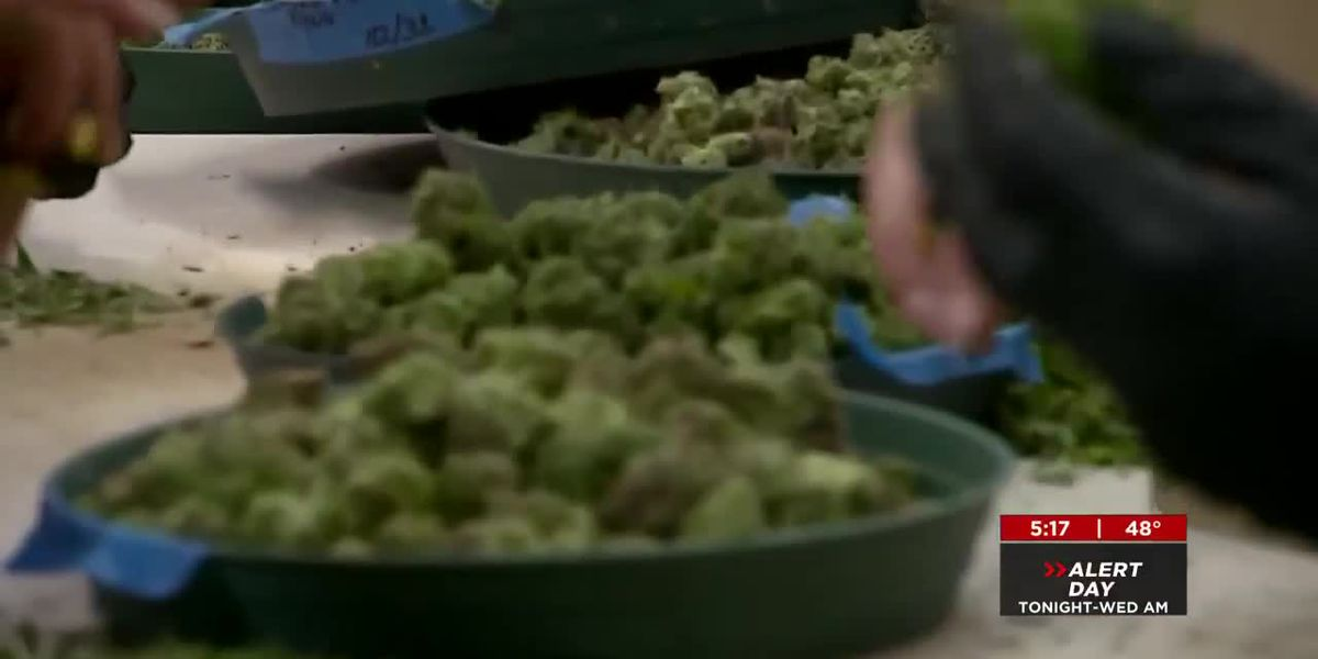 Public Safety Committee discusses making marijuana less of a priority for police