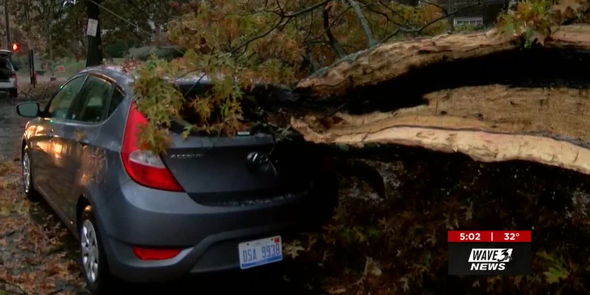 Early winter storm, late falling leaves cause trees to fall