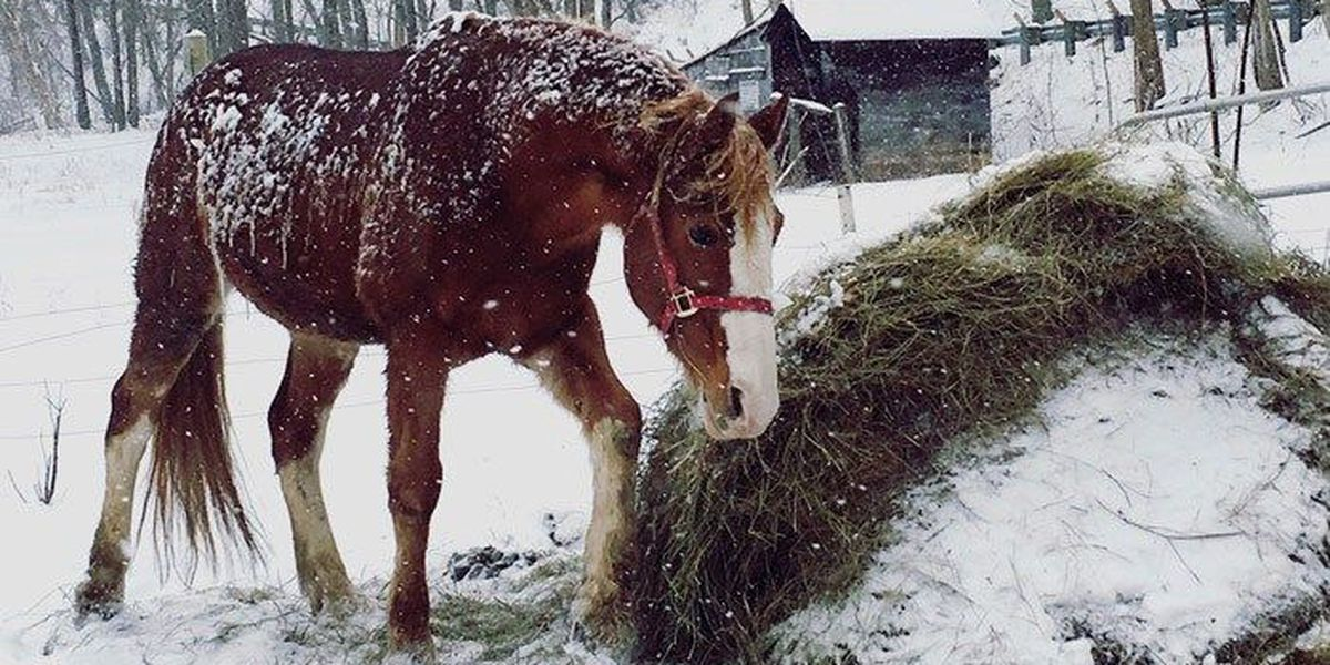 FRIDAY IMAGES: Viewers share their photos as snow pounds WAVE Country