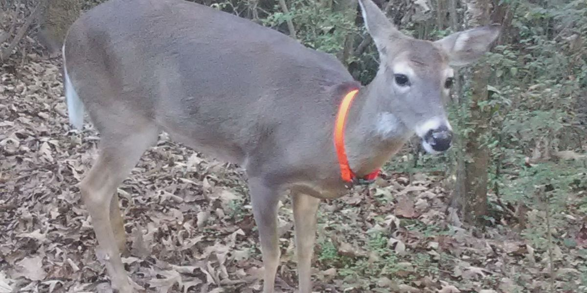 Indiana DNR form allows people to report dead, sick animals