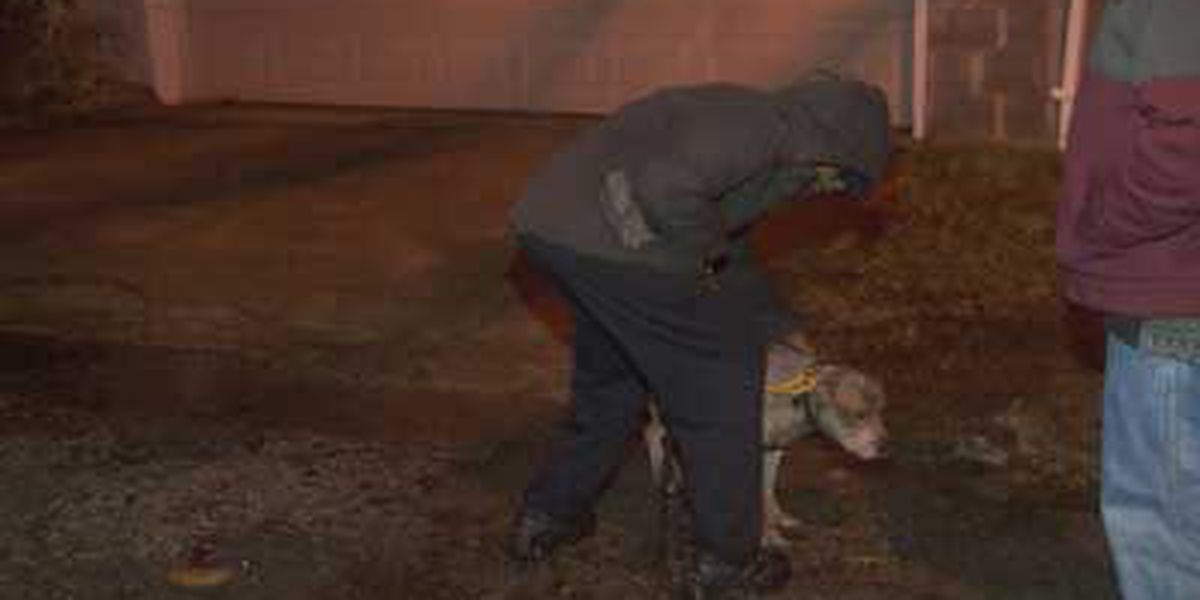 Dog rescued hours after fire, was believed to be dead