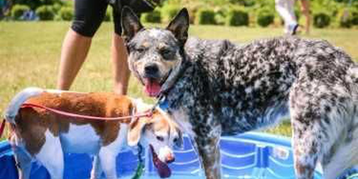 Waggin' Trail Walk & Festival for the animals set for June 10