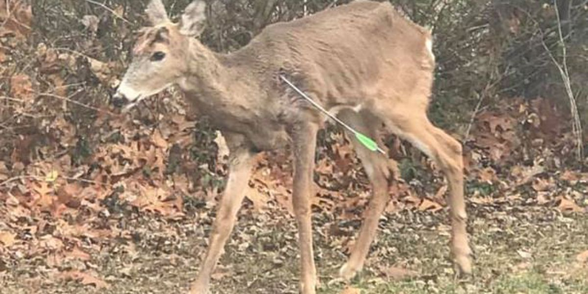 Deer dies 2 weeks after being wounded by arrow near Cherokee Park