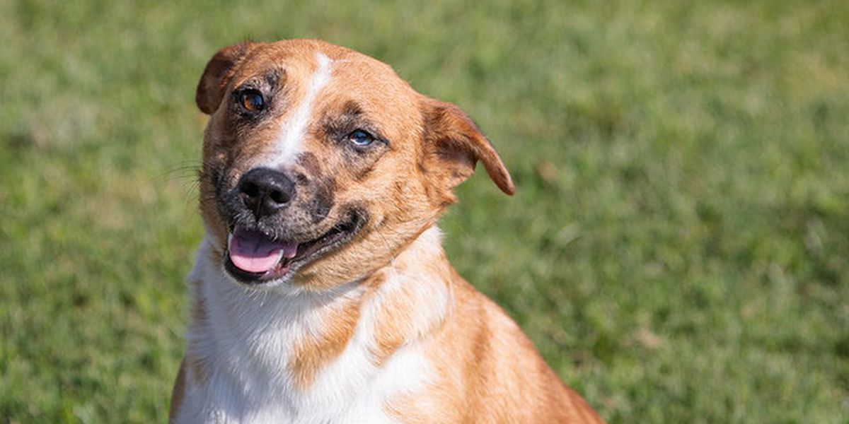 PHOTOS: This week's adorable, adoptable pets from KHS