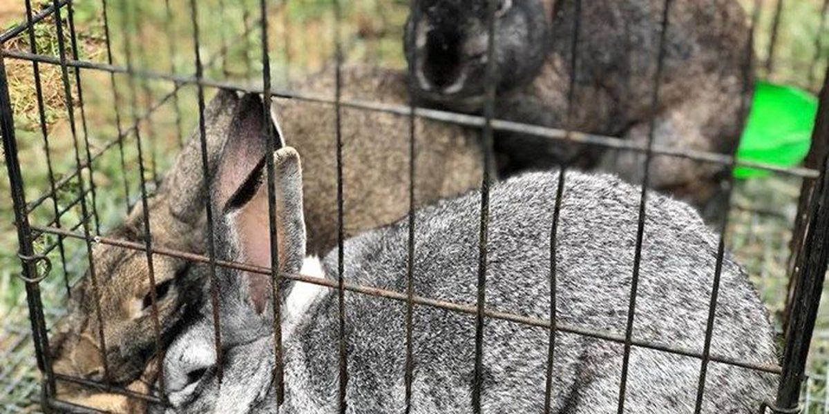 Southern Indiana firefighters save rabbits from fire