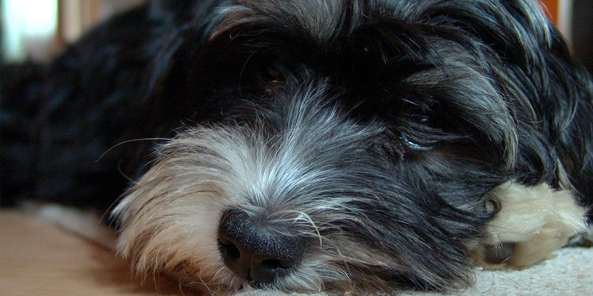 Pet owners concerned on what post-pandemic life may look like