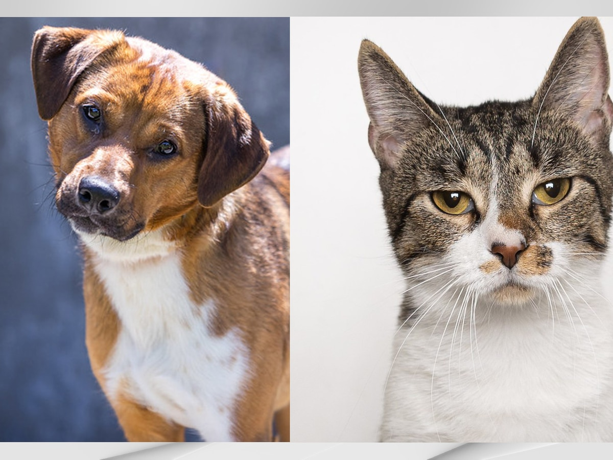 Kentucky Humane Society hosts Empty the Shelters adoption event