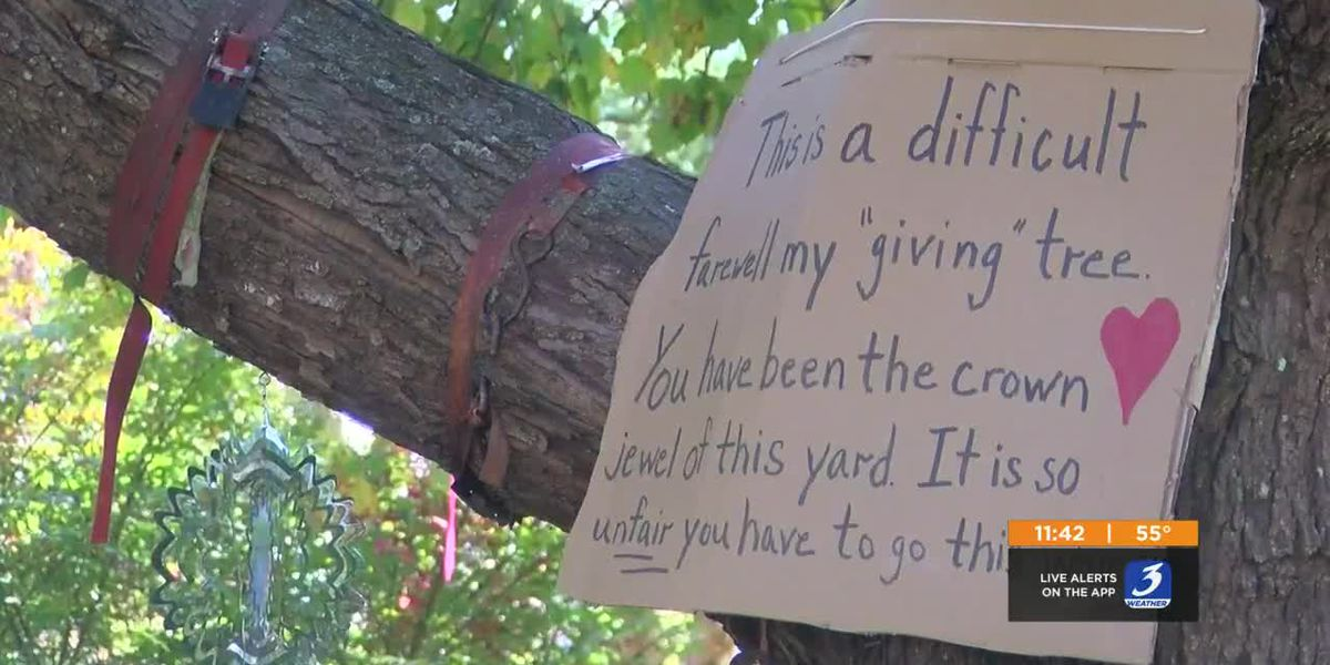 Southern Indiana homeowner set to lose entire backyard of trees due to power lines