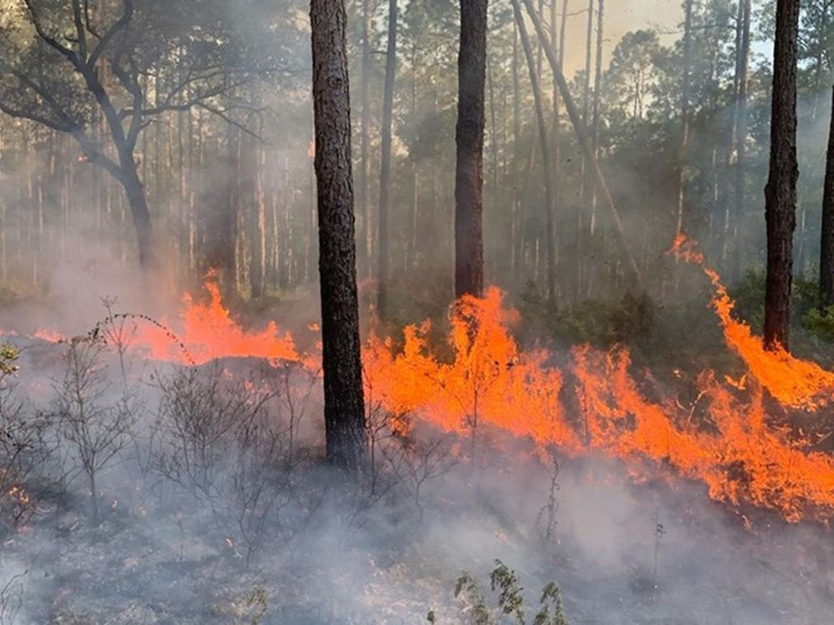 Dry weather leads to more burn bans across the state
