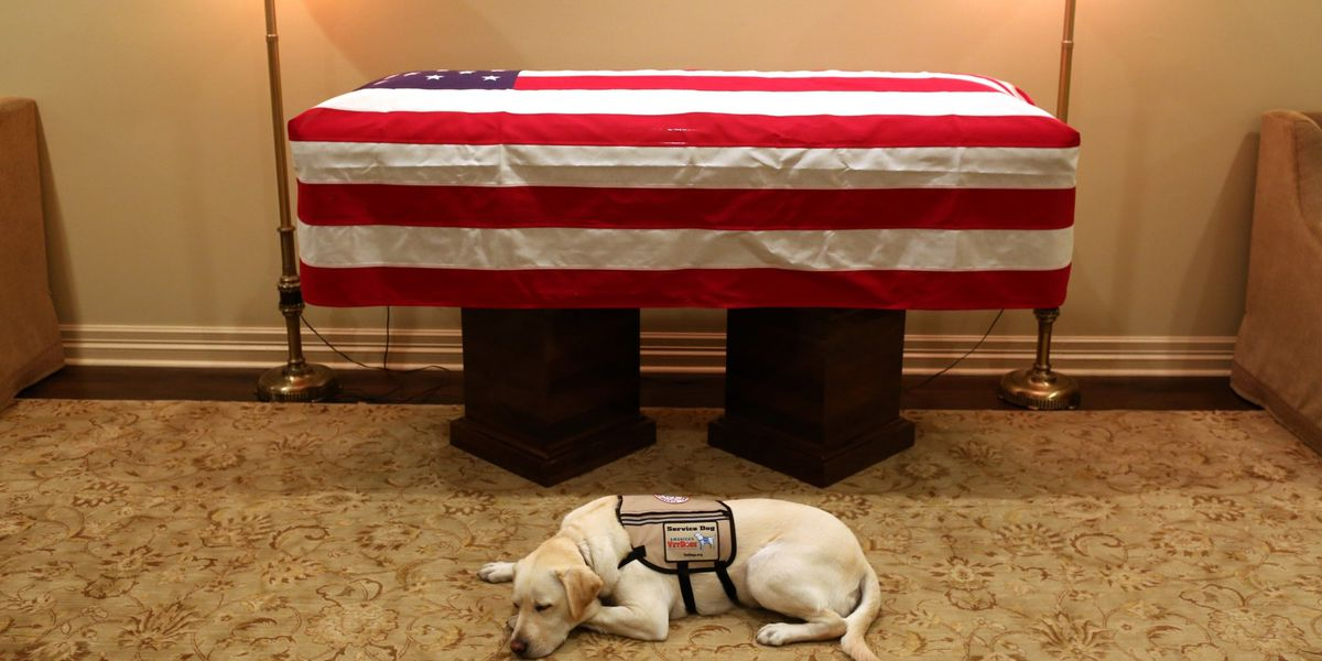 Sully, service dog of George H.W. Bush, earns award