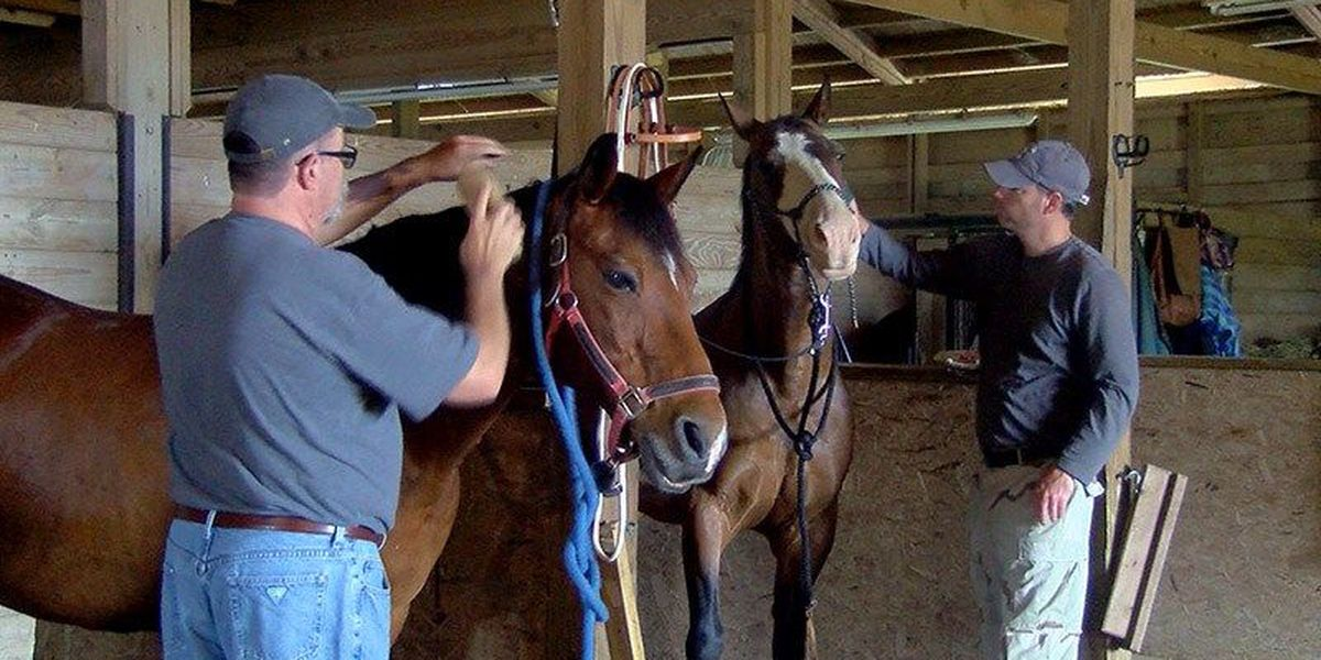 Horses help veterans connect, heal