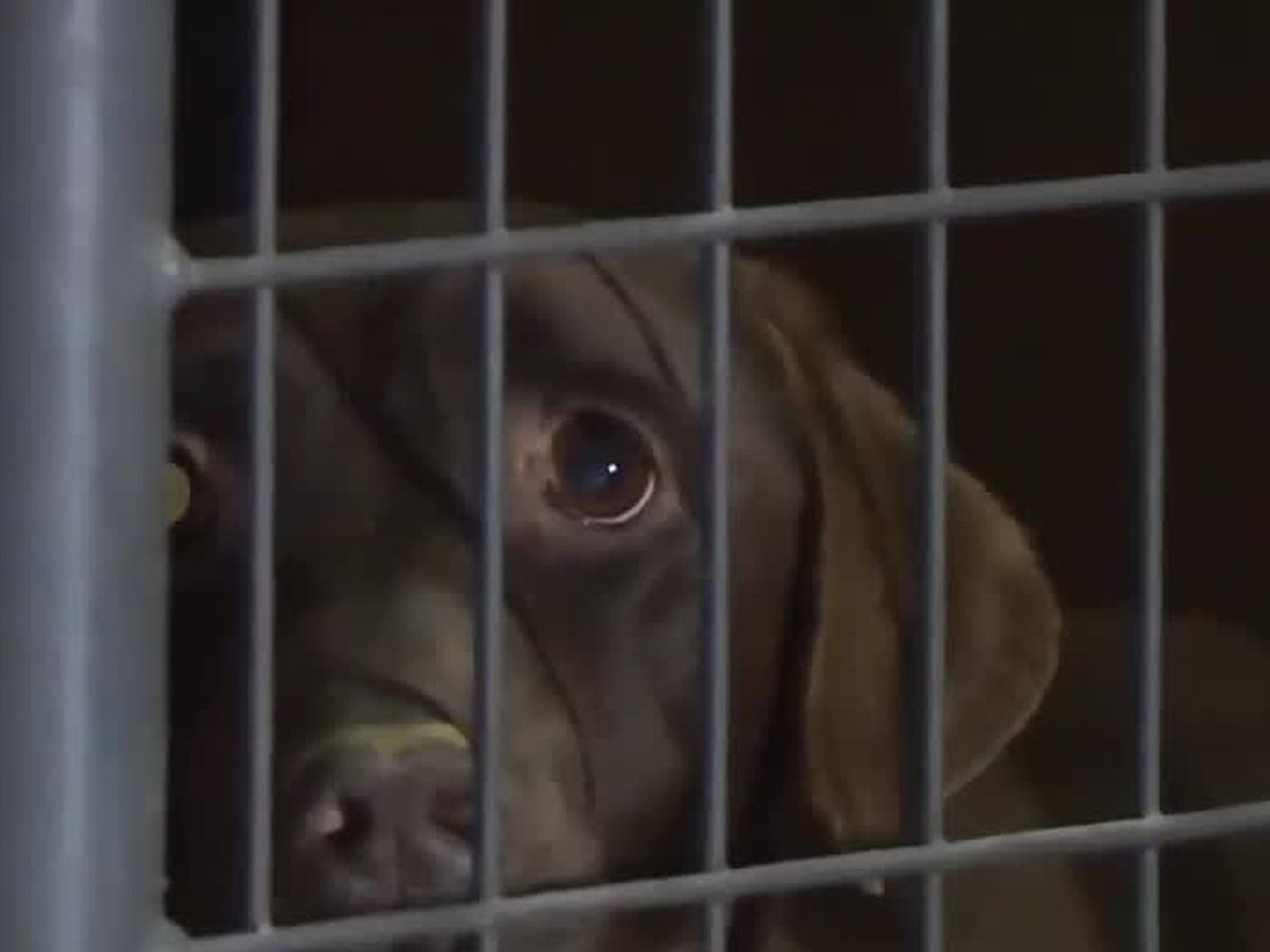 Cincinnati area animal rescuers help with 'horrific' cruelty case in Kentucky
