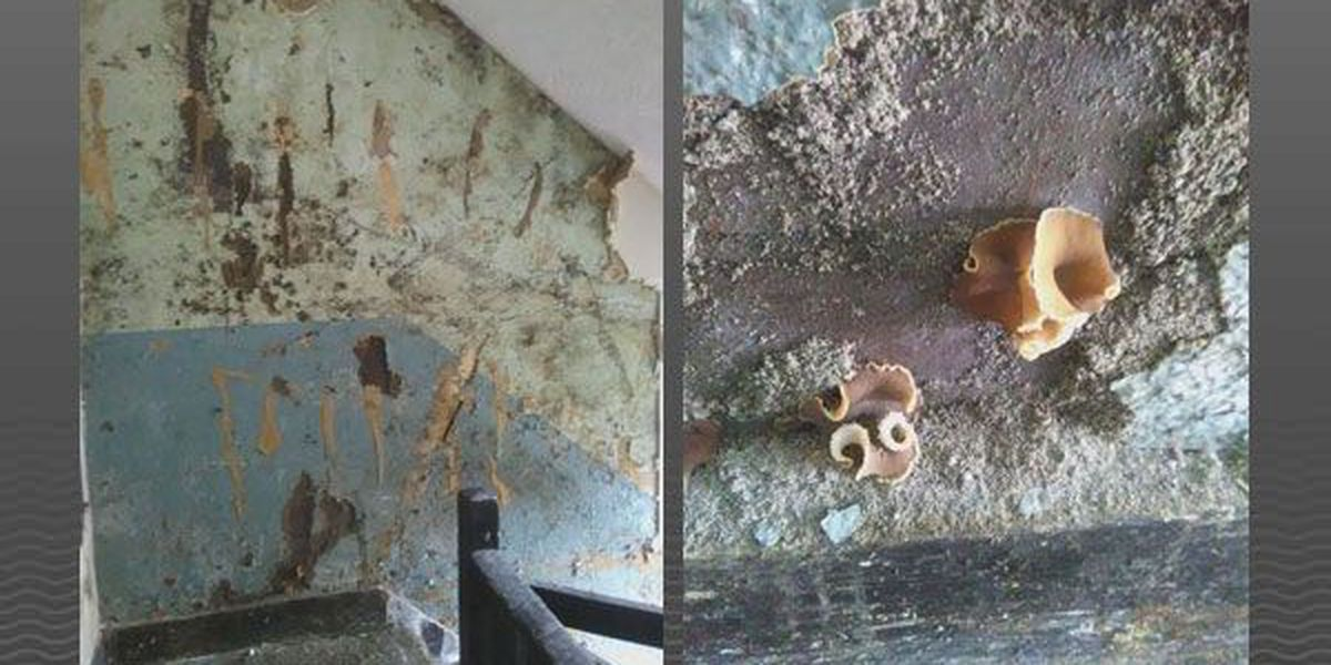 Mold, fungus no stranger to Old Louisville apartment