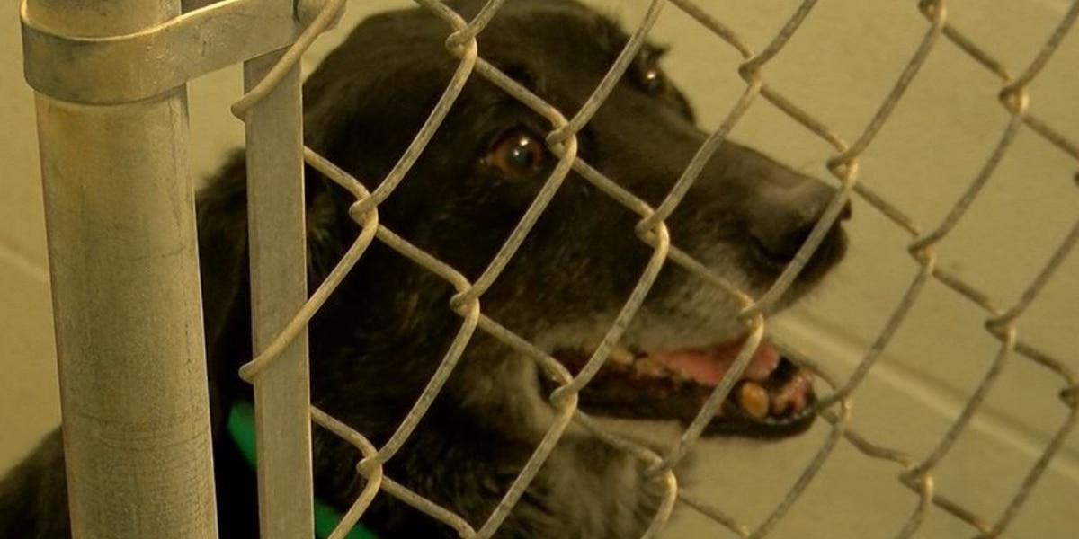 Harrison County Animal Shelter partially reopens