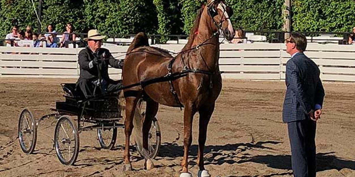 William Shatner wins blue ribbon, promotes equine therapy for veterans