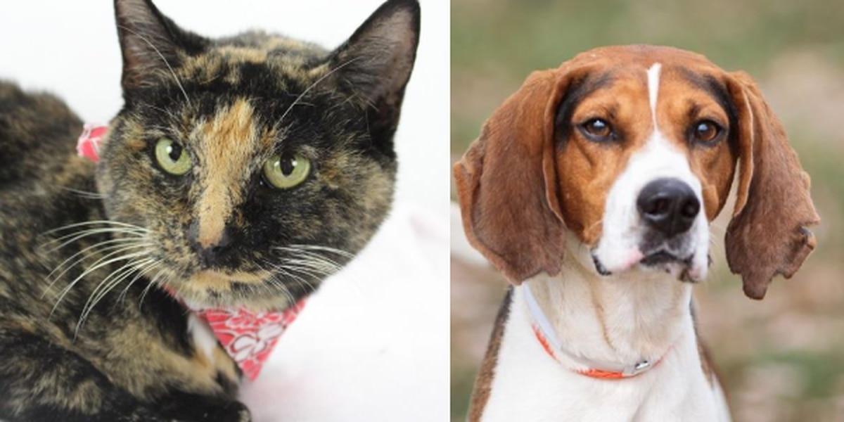 Help Kentucky Humane Society 'Empty the Shelters' Saturday