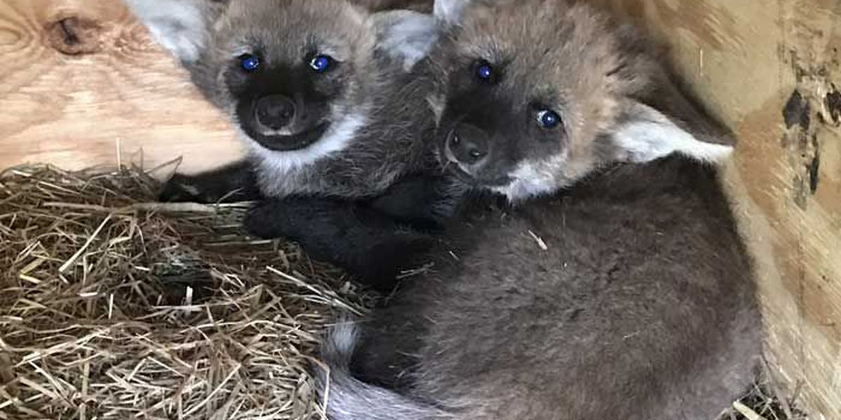 The Louisville Zoo welcomes two special deliveries