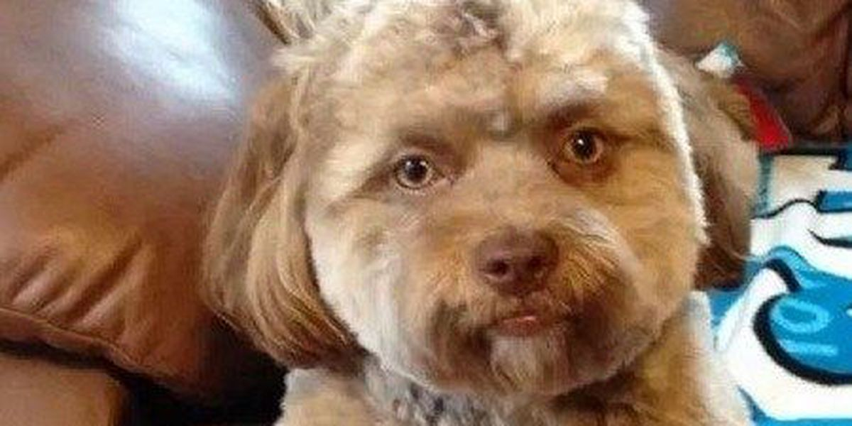 Dog with human face is freaking out the internet
