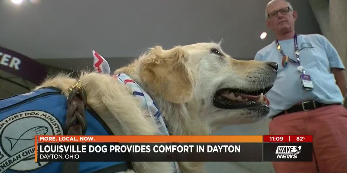 Mercy the comfort dog returns from mission trip to Ohio