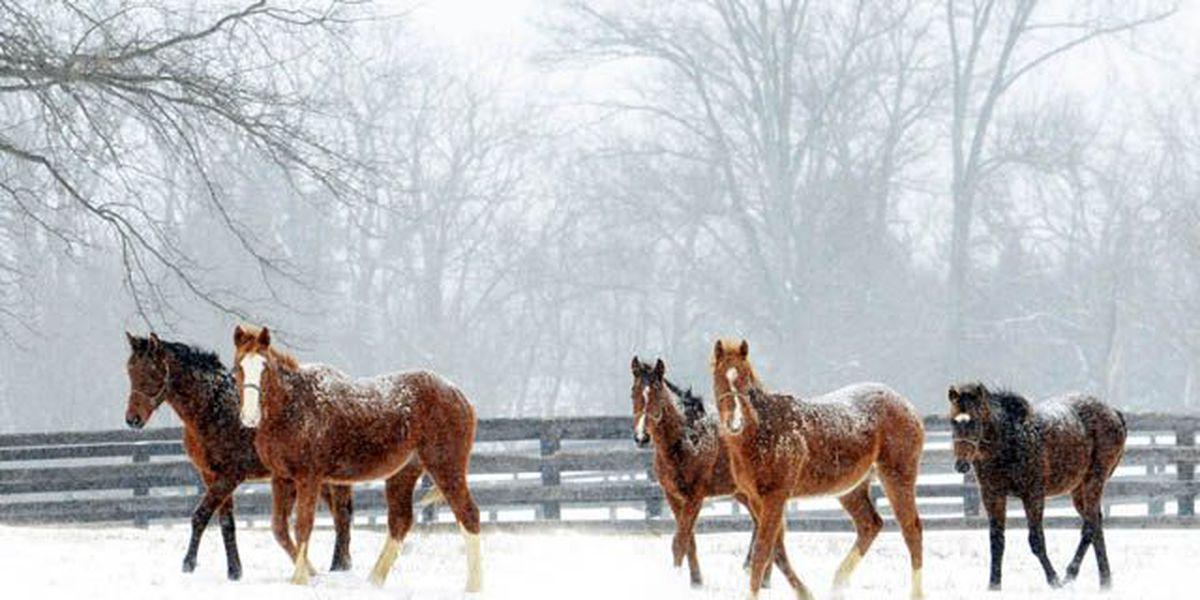 IMAGES: Pulitzer Prize-winning photographer Dan Dry shares winter pics
