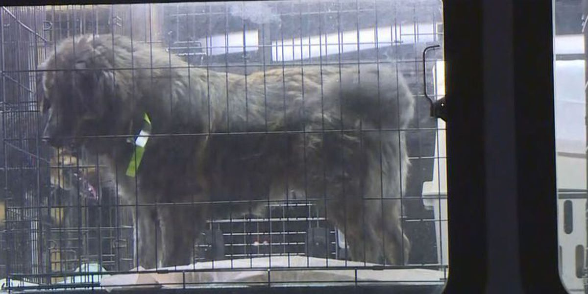 Two facing charges after hundreds of animals rescued from overrun animal shelter