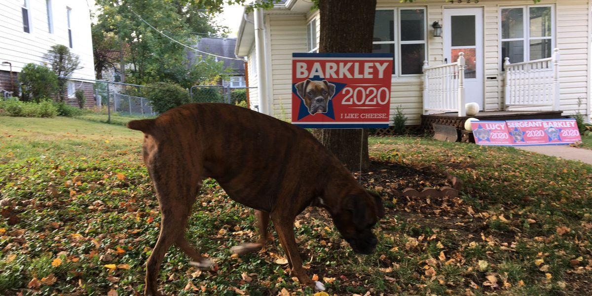 'Barkley 2020': Dog's political signs make Nebraska neighborhood smile