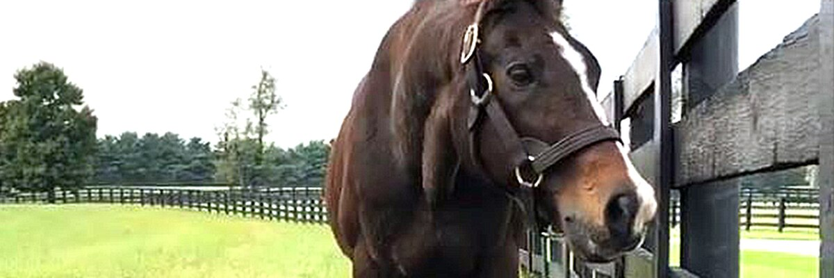 Legendary stallion A.P. Indy dies at 31