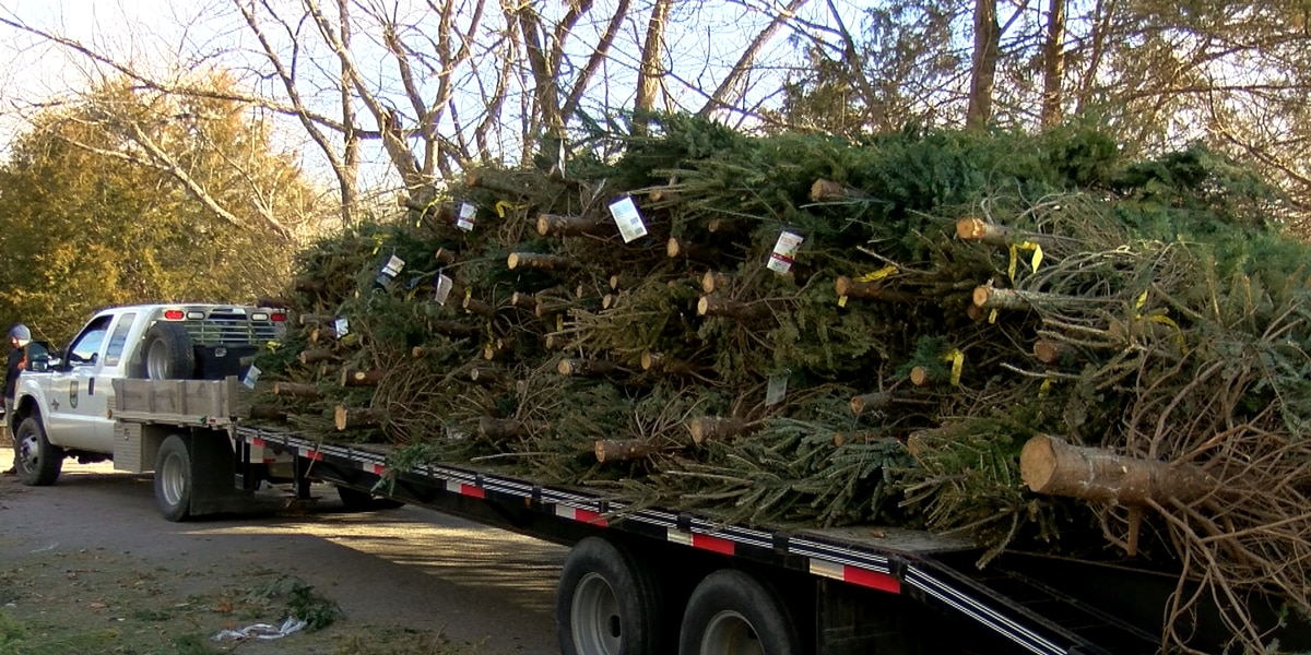 Christmas trees re-purposed into habitat material at Taylorsville Lake
