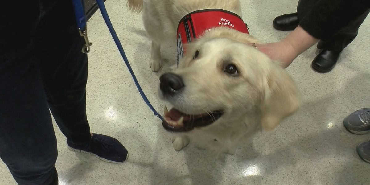Norton Healthcare welcomes new therapy dogs