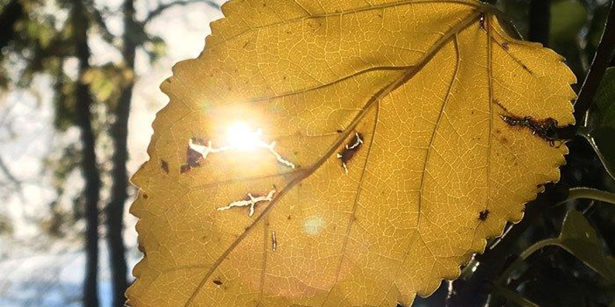 SLIDESHOW: Better late than never - take a look at these fall pics!