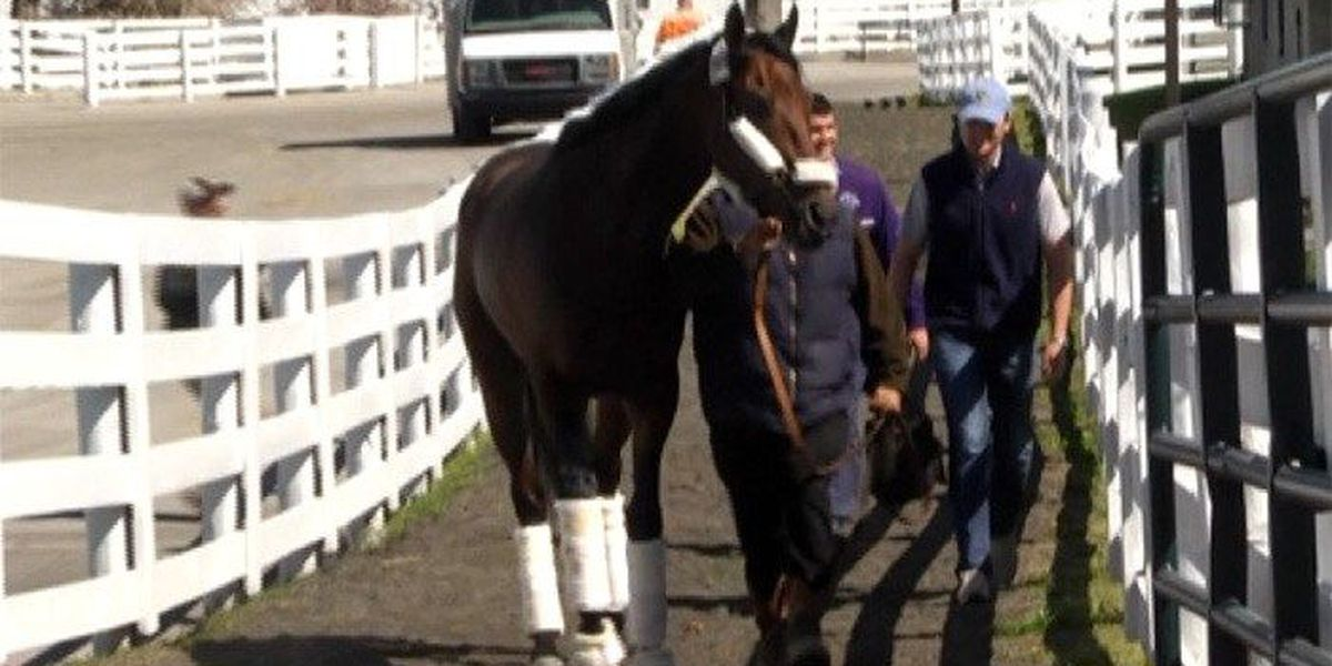 Derby champ Nyquist arrives in Baltimore