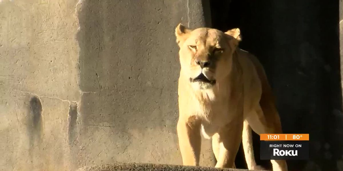 Louisville Zoo asks for more funding as it celebrates 50 years
