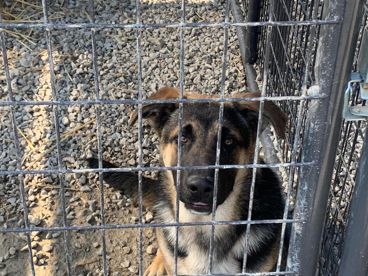 Spencer Co. Animal Shelter sees uptick in surrenders, strays amid coronavirus outbreak