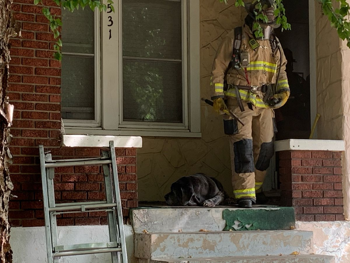 Louisville firefighters rescue dog from house fire