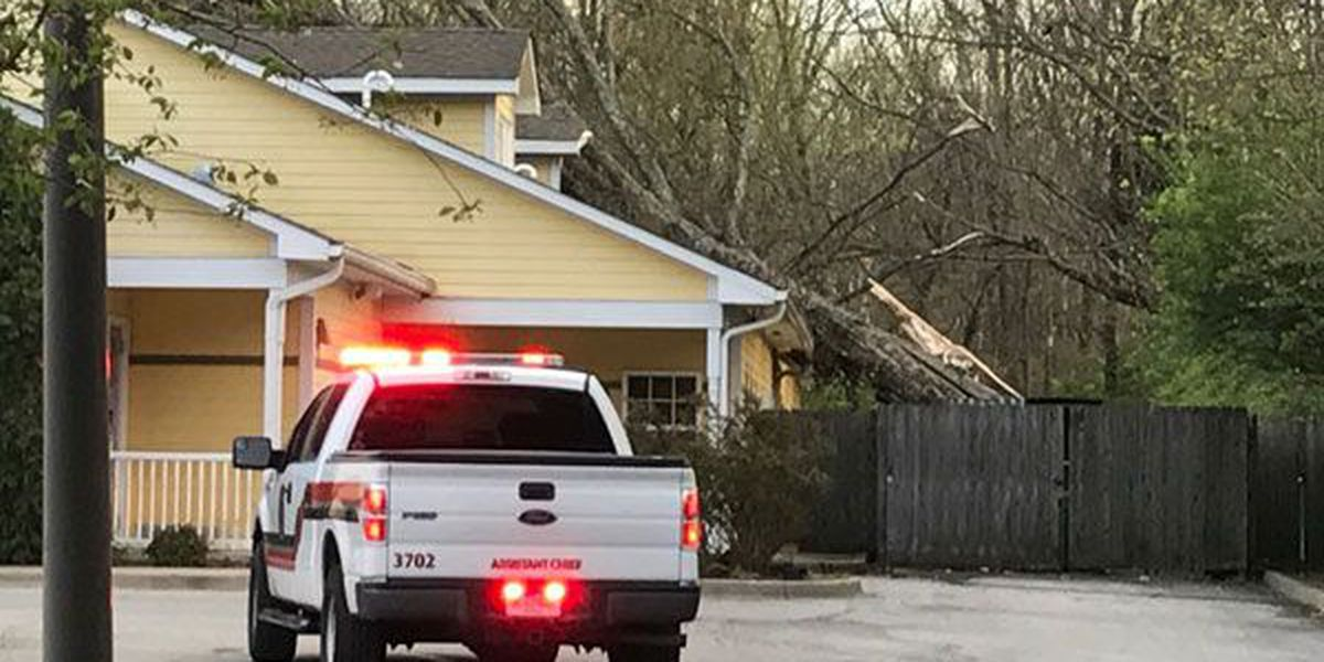Tree falls on Louisville day care