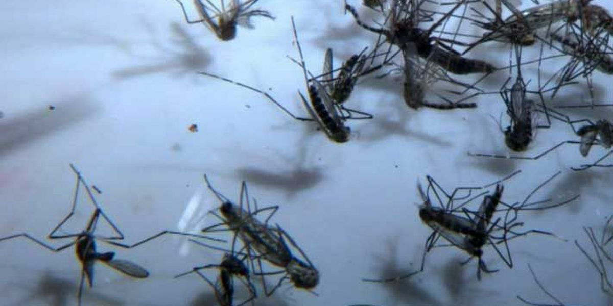West Nile death reported in Louisville