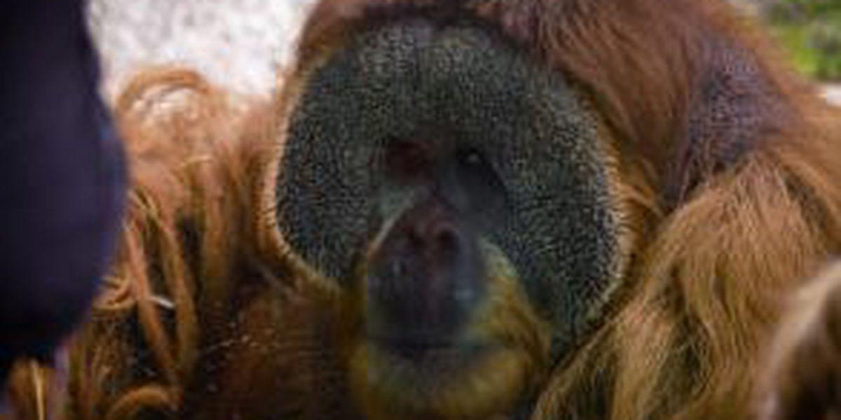 Louisville Zoo to hold job fair on January 19