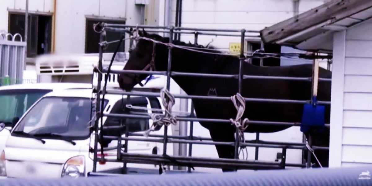 Kentucky Derby thoroughbred slaughtered for meat in South Korea