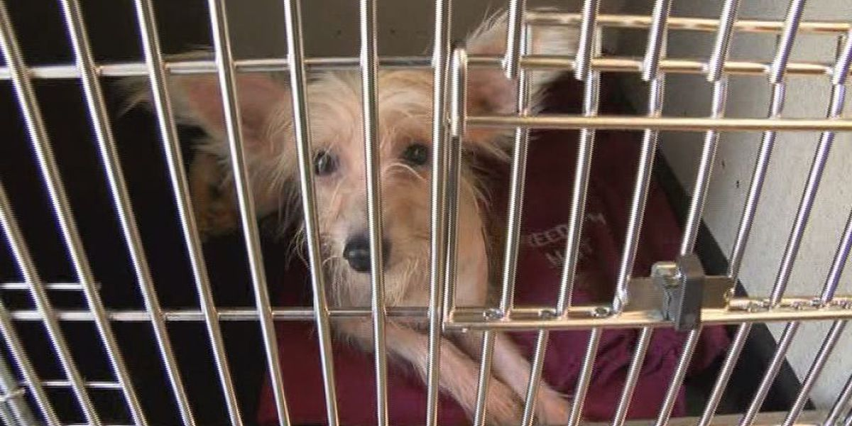 Southern Indiana Animal Shelter Rescues 68 Dogs From One Home