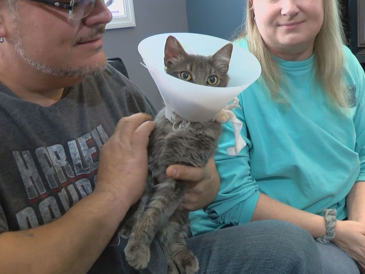 Louisville family upset after cat shot with arrow; cruelty registry proposed