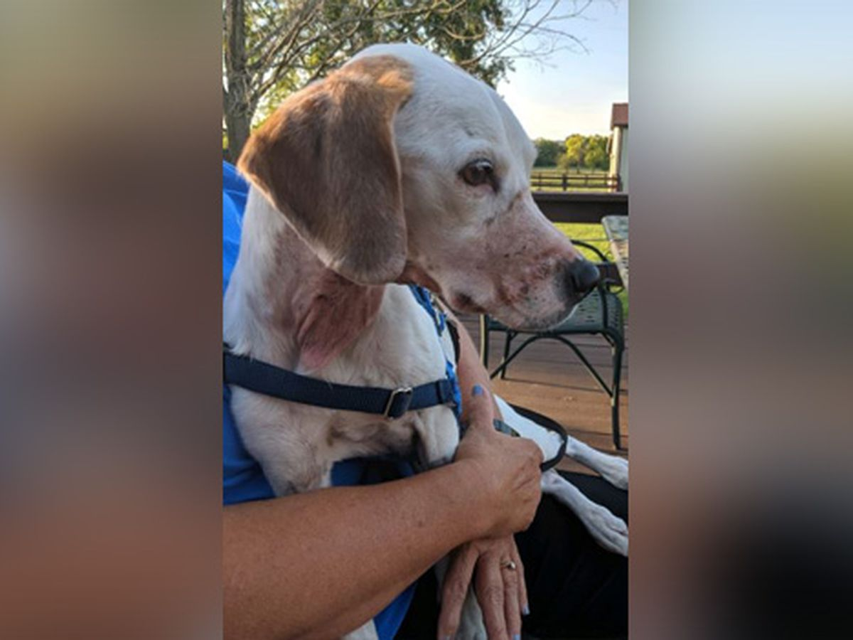 Dog found bound with duct tape, throat cut; police looking for owner
