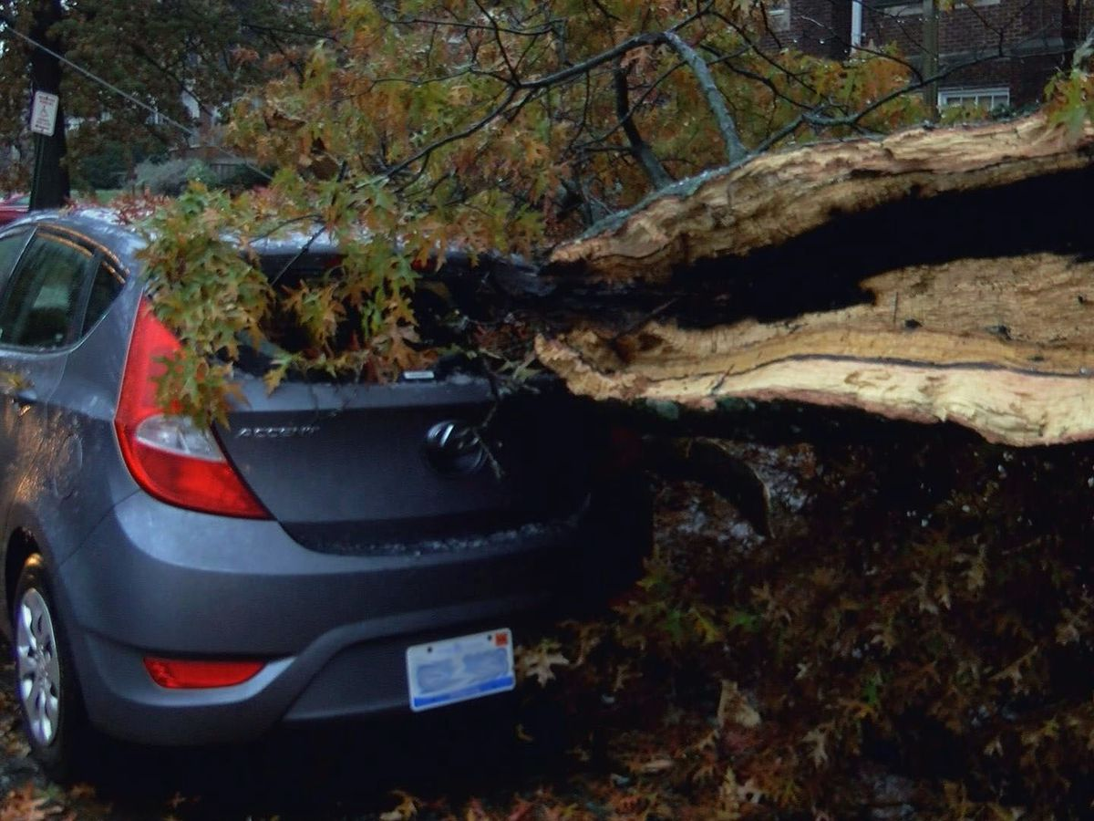 Late falling leaves, early winter storm cause trees to fall