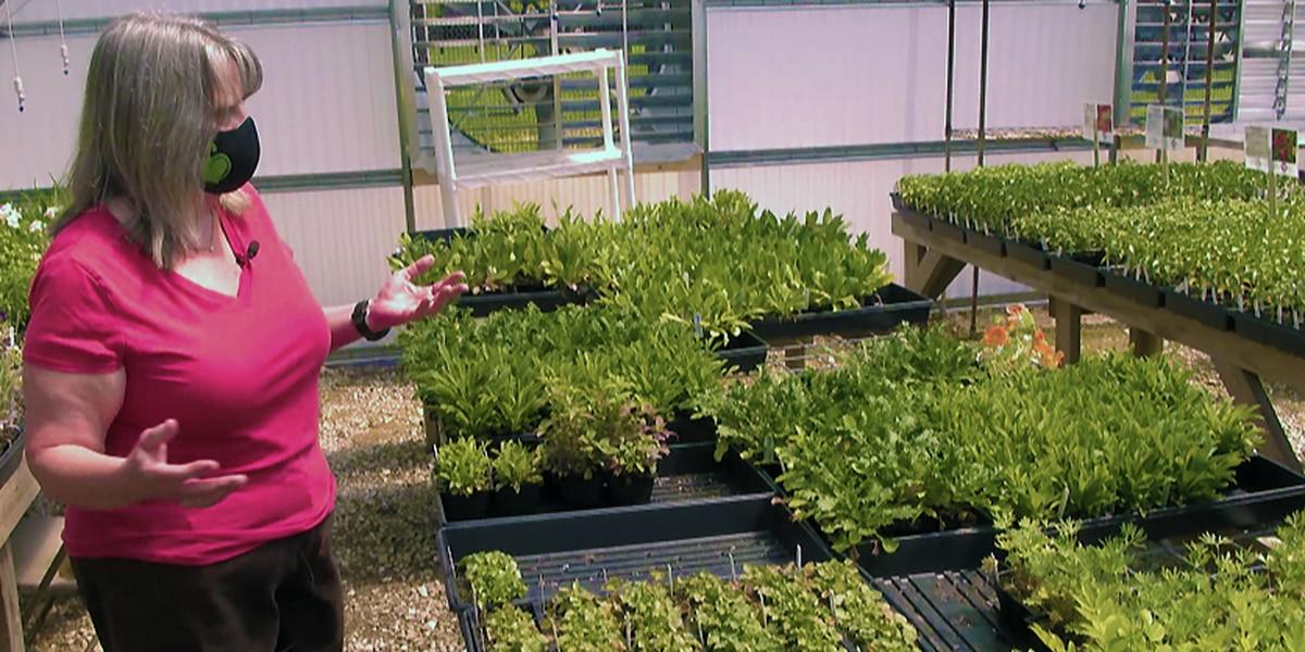 $1,200 worth of plants, equipment stolen Louisville nonprofit's greenhouse