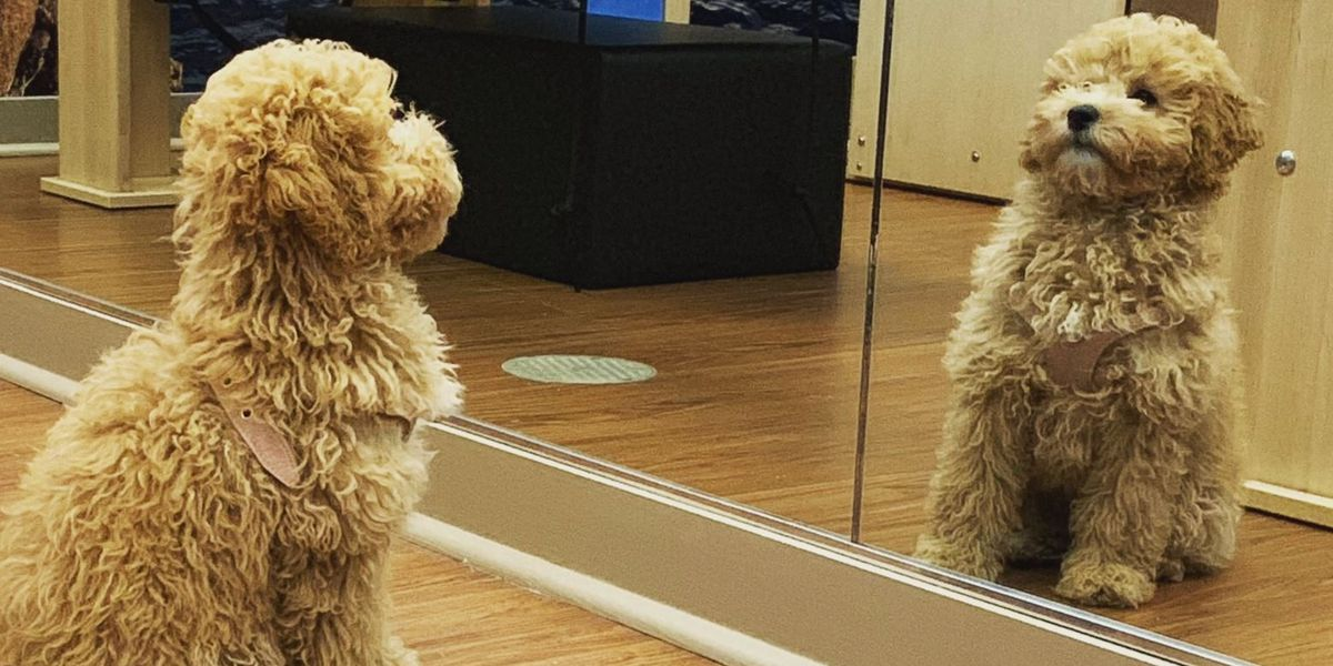 Meet Louisville's cloned dog